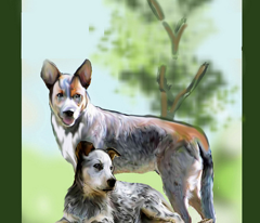 Rrraustralian_cattle_dog_yard_flag_upload_comment_208218_preview