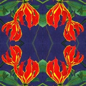 Flame_lily