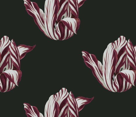 Rmidnight__tulips_in_burgundy__shop_preview