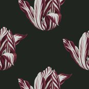 Rmidnight__tulips_in_burgundy__shop_thumb