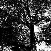 Black_tree_shop_thumb