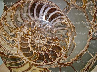 Fossil Spirals
