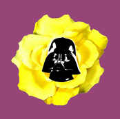 Vader Yellow Rose on Purple