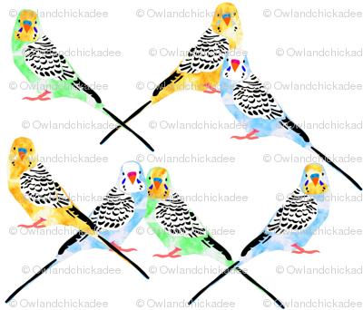 Parakeets Looking at You - Watercolor