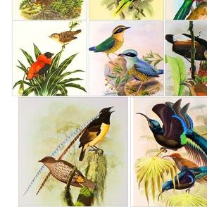 bird_panel_1