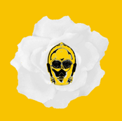 3PO White Rose on Yellow