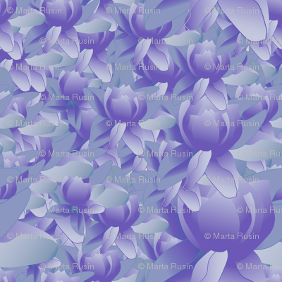lotus blooms in purple