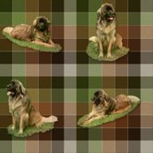 Rrrleonbergertartan1_full1a_shop_thumb