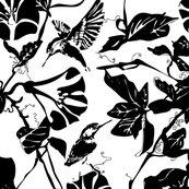 Rkingfisher_black___white_shop_thumb