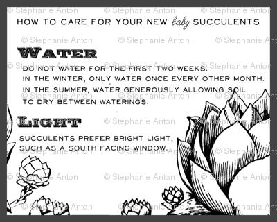 Baby Succulent Info Sheet
