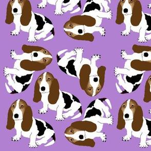 Basset Hound on Purple