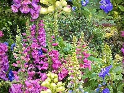 Delphinium Garden Large