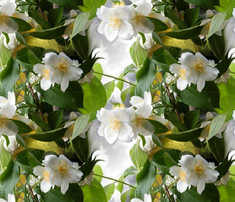 Rmock-orange-blossoms_shop_preview