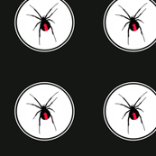Redback Spider on Black