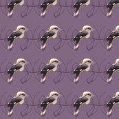 Kookaburra_-_decal_shop_thumb