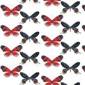 Red_and_black_butterfly_wallpaper_copy_shop_thumb