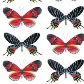 Rrred_and_black_butterfly_wallpaper_copy_shop_thumb