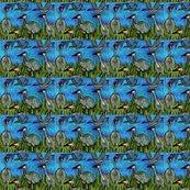 Sandhill_cranes_edited-1_ed_shop_thumb