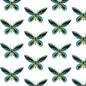 5x5_birdwing