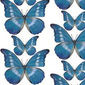 Rrr15x15_blue_butterfly_decal_shop_thumb