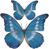 15x15_Blue_Butterfly_Decal