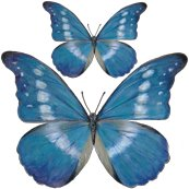 Rrrr15x15_blue_butterfly_decal_shop_thumb