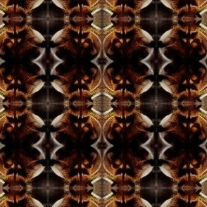 bucket raccoon