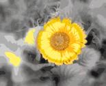 Rrgerber_daisy_thumb