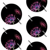 Rrafrican_daisies_shop_thumb