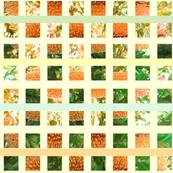 banksia squares