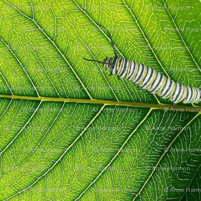 leaf_veins