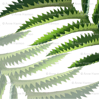 serrated_leaves