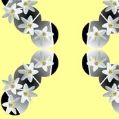 Rrwhite_flowers_shop_thumb