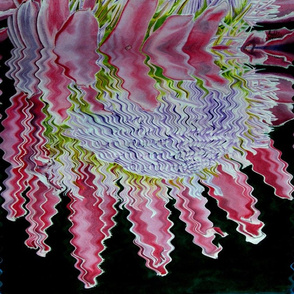 Reflected_Protea_by_Sylvie