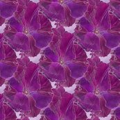 Dover_petunia_in_full_bloom_dk_brt_v_on_w_2_seamless_tiled_21x18_shop_thumb