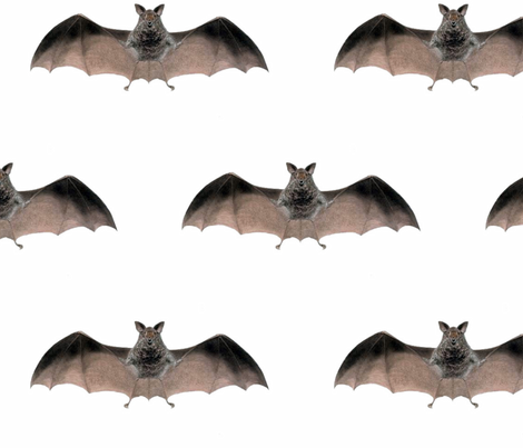 Crazy Bat-large fabric by susaninparis on Spoonflower - custom fabric