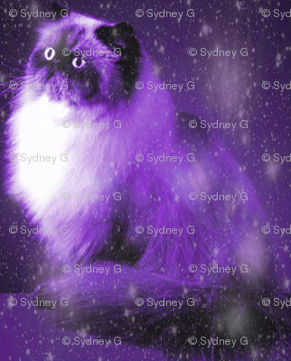 Persian-cat-11__1__preview