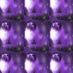 persian-cat-11__1_