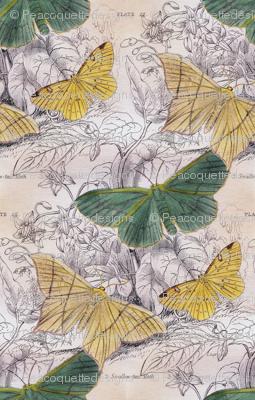 Moth Ridden Botanical