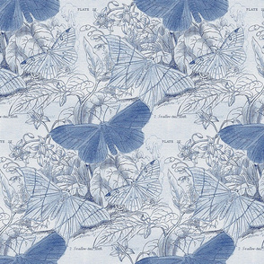 Moth Ridden Botanical ~ Blue & White