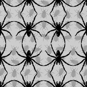 Spider_Dance_grey