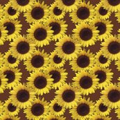 1482408_rseamless_sunflowers_shop_thumb