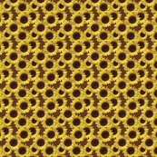 Rrr1482408_rseamless_sunflowers_shop_thumb