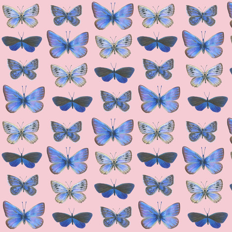 small butterflies, sunrise-F5CCD3 fabric by weavingmajor on Spoonflower - custom fabric