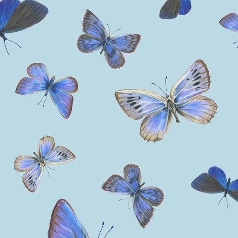 R0_butterflies3b_toss-bcdae4_shop_preview