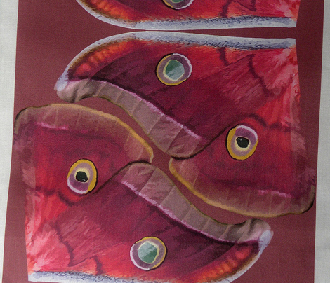 Polyphemus Moth Wings