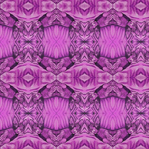 Violet Sphynx Lena in Radiant Orchid