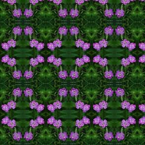 purple-gerardia