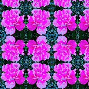 Rose- aholic