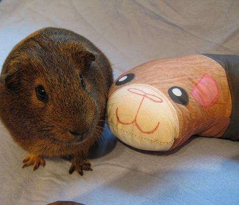 Guinea Pig Neck Pillow